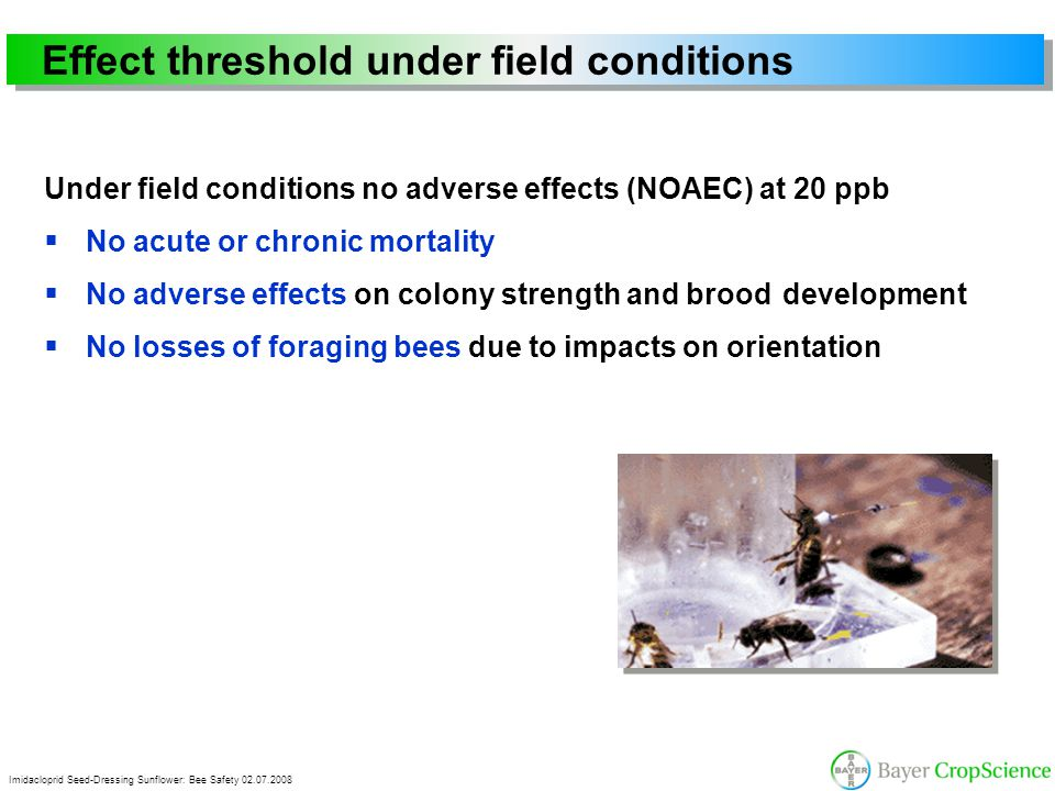 Imidacloprid Seed-Dressing Sunflower: Bee Safety 02.07.2008 Effect threshold under field conditions Under field conditions no adverse effects (NOAEC)