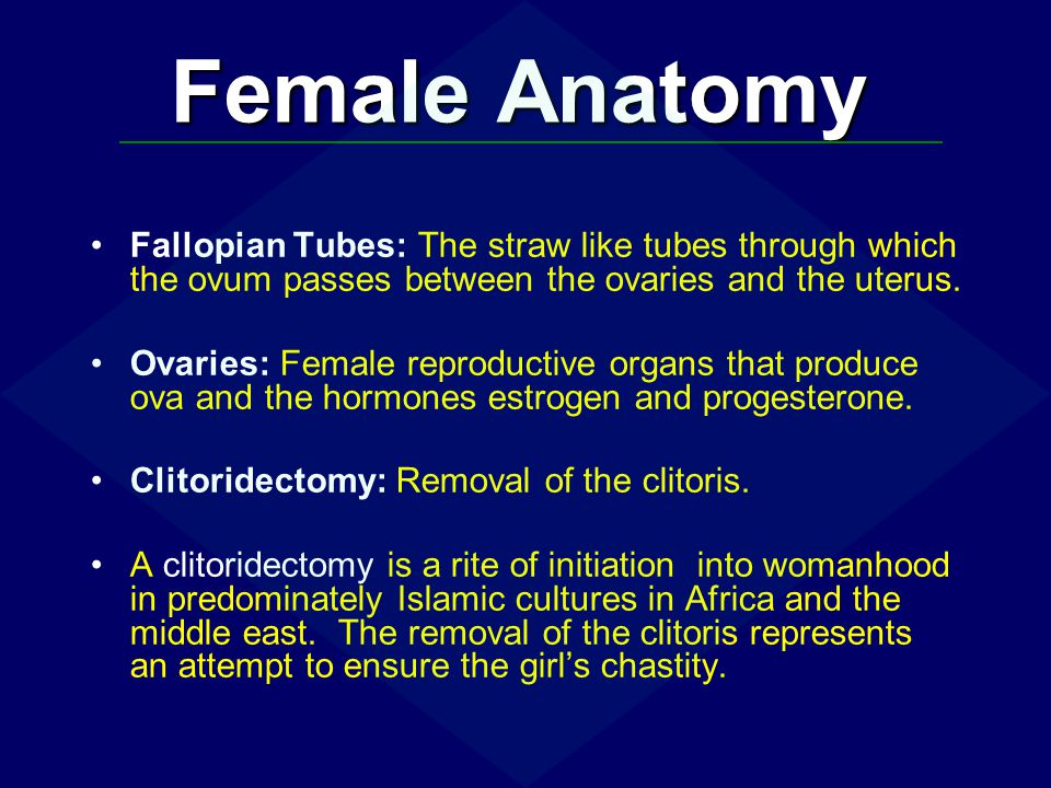 Fallopian Tubes: The straw like tubes through which the ovum passes between the ovaries and the uterus. Ovaries: Female reproductive organs that produ