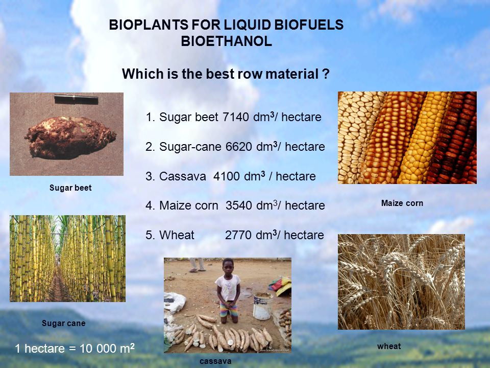 BIOPLANTS FOR LIQUID BIOFUELS BIOETHANOL Which is the best row material ? 1. Sugar beet 7140 dm 3 / hectare 2. Sugar-cane 6620 dm 3 / hectare 3. Cassa