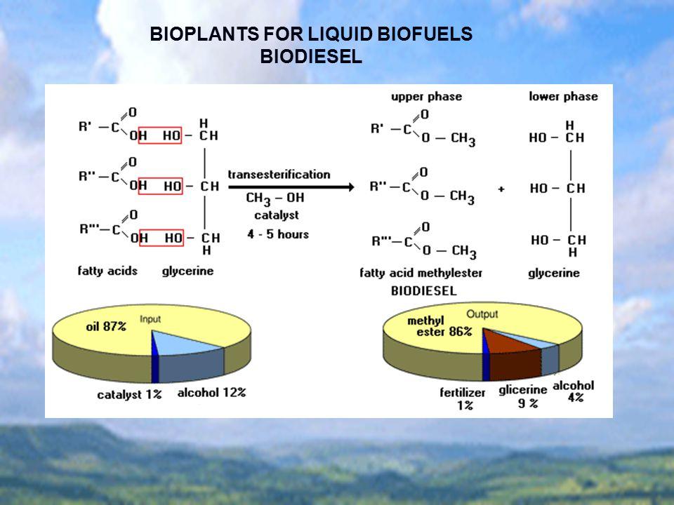 BIOPLANTS FOR LIQUID BIOFUELS BIODIESEL