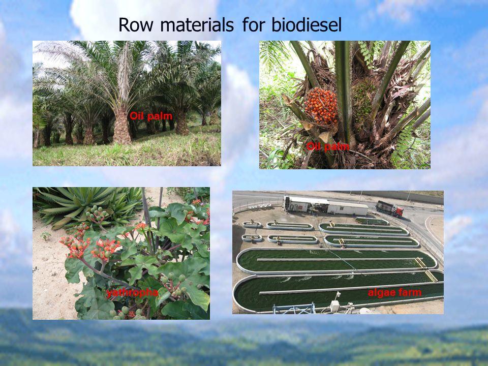 Row materials for biodiesel Oil palm yathrophaalgae farm