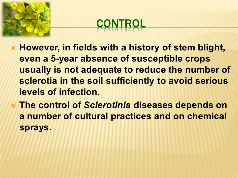  However, in fields with a history of stem blight, even a 5-year absence of susceptible crops usually is not adequate to reduce the number of sclerotia in the soil sufficiently to avoid serious levels of infection.