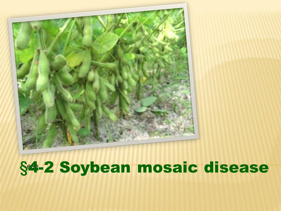 eee §4-2 Soybean mosaic disease