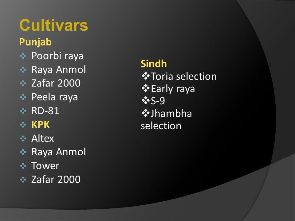 Cultivars Punjab PPoorbi raya RRaya Anmol ZZafar 2000 PPeela raya RRD-81 KKPK AAltex RRaya Anmol TTower ZZafar 2000 Sindh  Toria