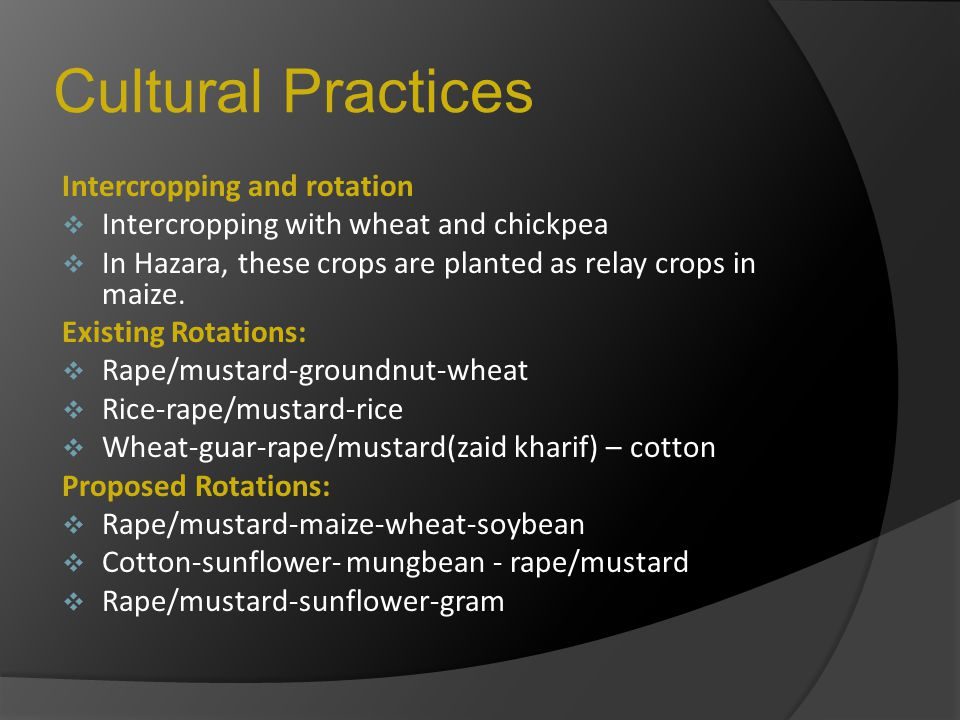 Cultural Practices Intercropping and rotation  Intercropping with wheat and chickpea  In Hazara, these crops are planted as relay crops in maize. Ex