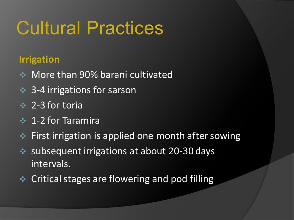 Cultural Practices Irrigation  More than 90% barani cultivated  3-4 irrigations for sarson  2-3 for toria  1-2 for Taramira  First irrigation is