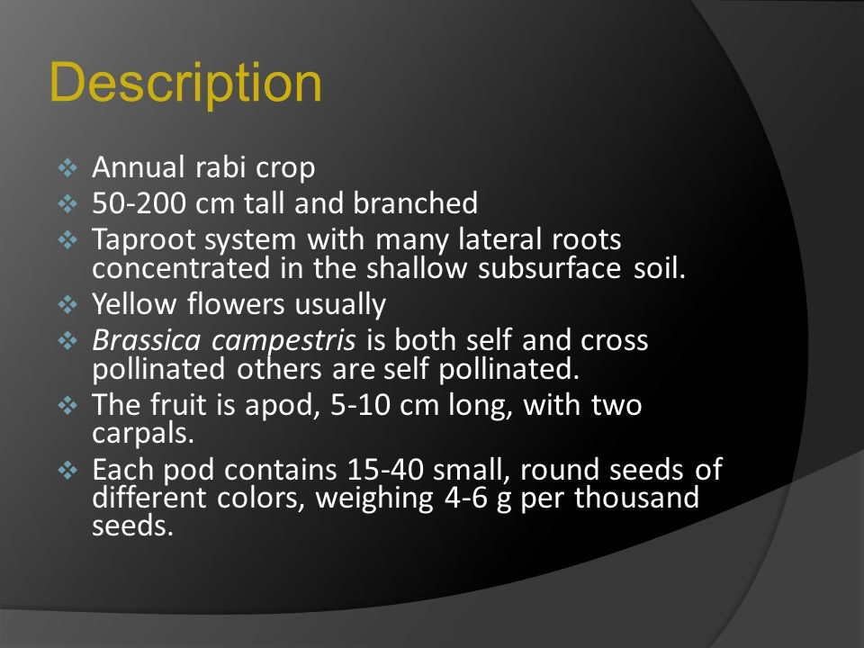 Description  Annual rabi crop  50-200 cm tall and branched  Taproot system with many lateral roots concentrated in the shallow subsurface soil.  Y