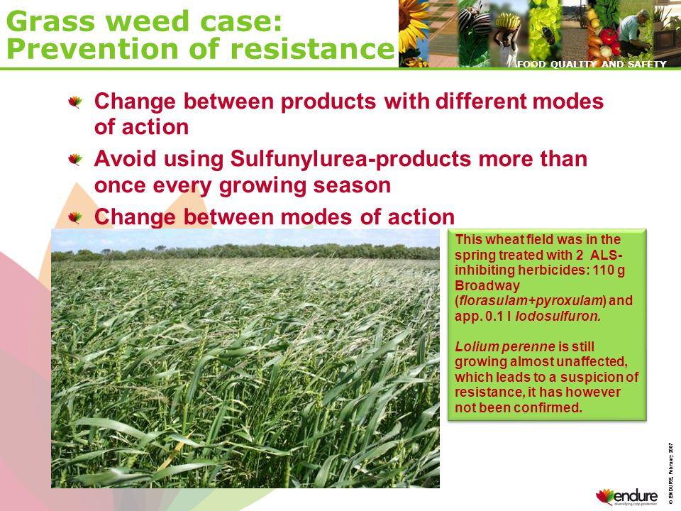 © ENDURE, February 2007 FOOD QUALITY AND SAFETY © ENDURE, February 2007 FOOD QUALITY AND SAFETY Grass weed case: Prevention of resistance Change between products with different modes of action Avoid using Sulfunylurea-products more than once every growing season Change between modes of action This wheat field was in the spring treated with 2 ALS- inhibiting herbicides: 110 g Broadway (florasulam+pyroxulam) and app.