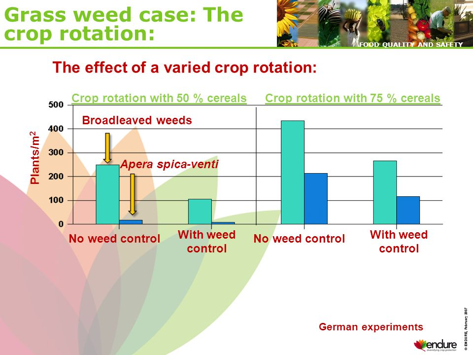 © ENDURE, February 2007 FOOD QUALITY AND SAFETY © ENDURE, February 2007 FOOD QUALITY AND SAFETY The effect of a varied crop rotation: Plants/m 2 Crop rotation with 50 % cerealsCrop rotation with 75 % cereals No weed control With weed control Broadleaved weeds Apera spica-venti German experiments Grass weed case: The crop rotation: