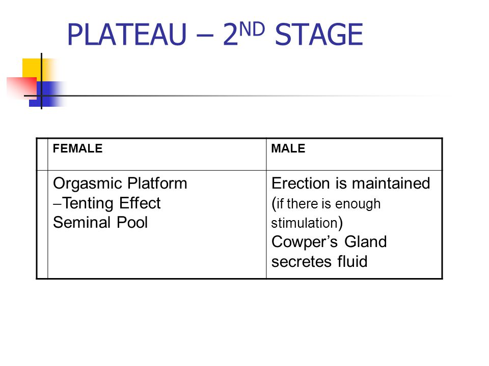 PLATEAU – 2 ND STAGE FEMALEMALE Orgasmic Platform  Tenting Effect Seminal Pool Erection is maintained ( if there is enough stimulation ) Cowper's Gland secretes fluid