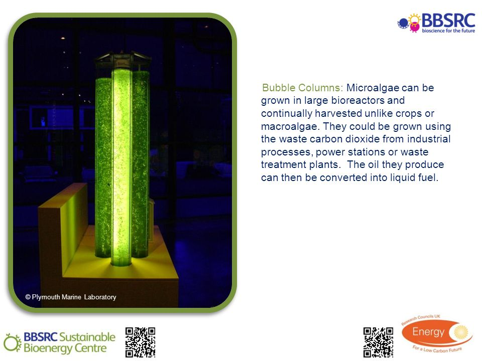 Bubble Columns: Microalgae can be grown in large bioreactors and continually harvested unlike crops or macroalgae.