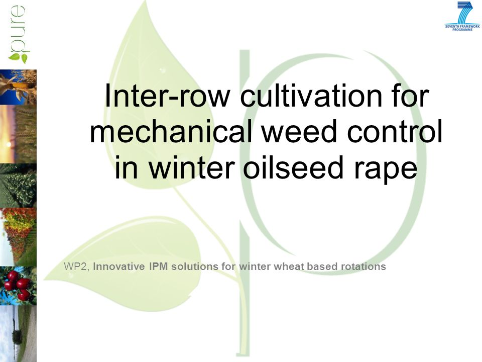 Inter-row cultivation for mechanical weed control in winter oilseed rape WP2, Innovative IPM solutions for winter wheat based rotations
