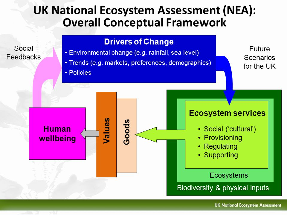 2 UK National Ecosystem Assessment (NEA): Overall Conceptual Framework Biodiversity & physical inputs Goods Values Social Feedbacks Future Scenarios for the UK Ecosystems Ecosystem services Drivers of Change Environmental change (e.g.