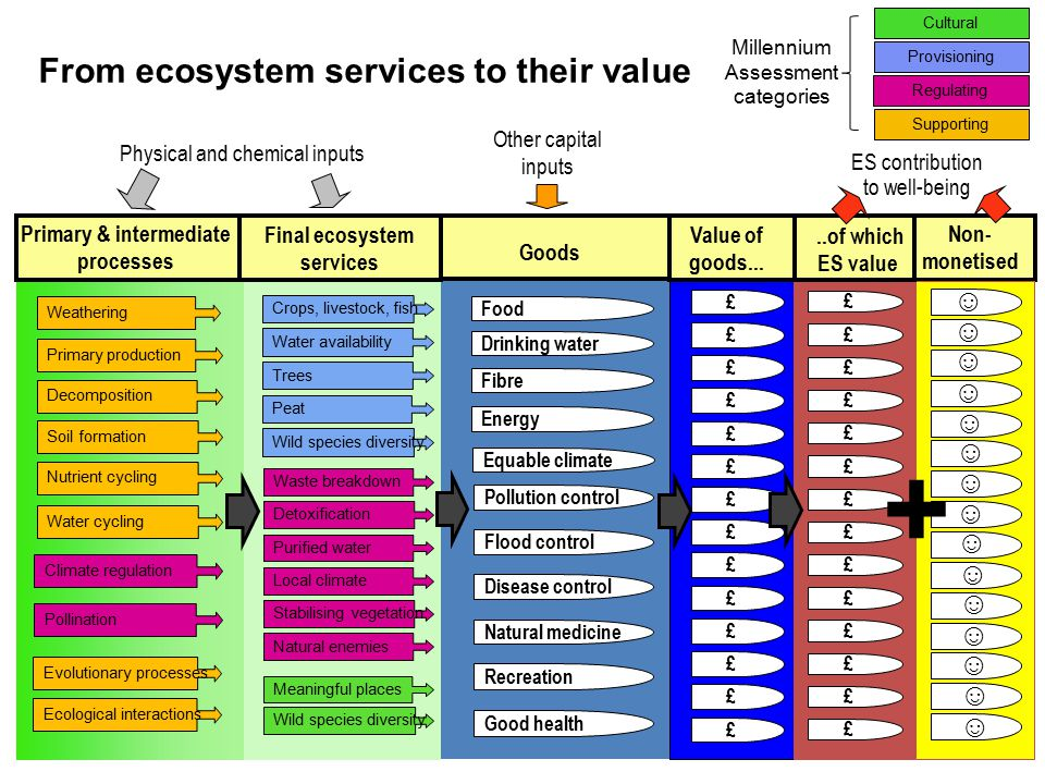 ES contribution to well-being Non- monetised Primary production Decomposition Soil formation Nutrient cycling Water cycling Weathering Climate regulation Pollination Evolutionary processes Ecological interactions Crops, livestock, fish Water availability Trees Peat Wild species diversity Drinking water Food Fibre Energy Equable climate £ £ £ £ £ £ £ £ £ £ £ £ £ £ £ £ £ £ £ £ £ £ £ £ £ £ £ £ Final ecosystem services Goods Value of goods.....of which ES value Primary & intermediate processes Physical and chemical inputs Other capital inputs Natural enemies Detoxification Local climate Waste breakdown Purified water Stabilising vegetation Meaningful places Wild species diversity Flood control Natural medicine Pollution control Disease control Good health Recreation ☺ ☺ ☺ ☺ ☺ ☺ ☺ ☺ ☺ ☺ ☺ ☺ ☺ ☺ ☺ Regulating Supporting Provisioning Cultural Millennium Assessment categories From ecosystem services to their value +