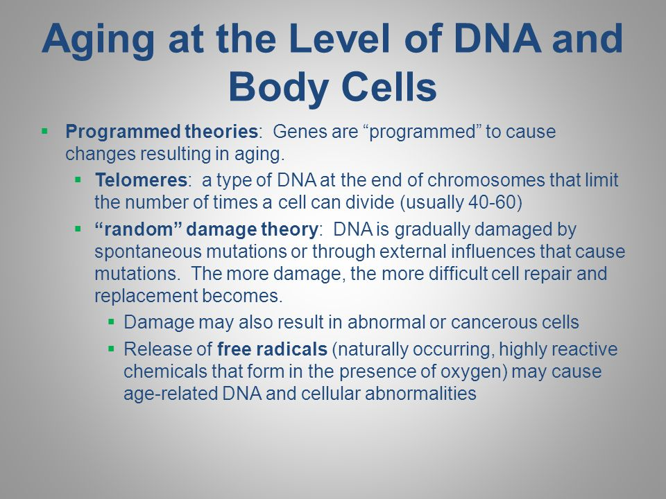 Aging at the Level of DNA and Body Cells  Programmed theories: Genes are programmed to cause changes resulting in aging.