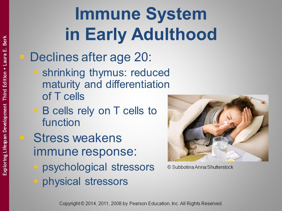 Immune System in Early Adulthood  Declines after age 20:  shrinking thymus: reduced maturity and differentiation of T cells  B cells rely on T cells to function  Stress weakens immune response:  psychological stressors  physical stressors Copyright © 2014, 2011, 2008 by Pearson Education, Inc.