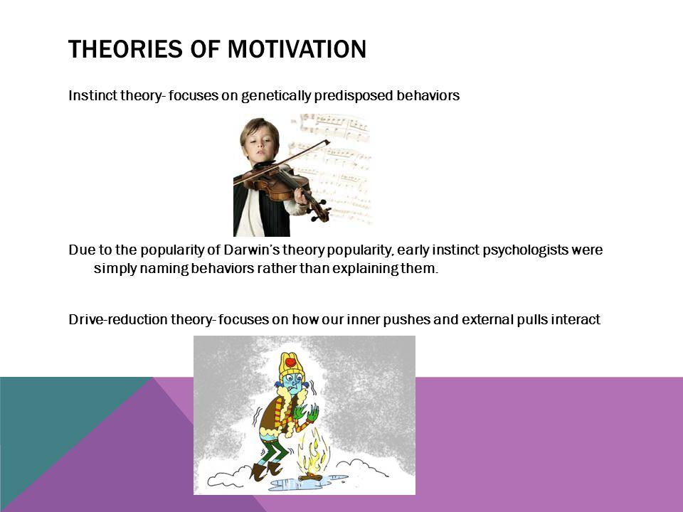 THEORIES OF MOTIVATION Instinct theory- focuses on genetically predisposed behaviors Due to the popularity of Darwin's theory popularity, early instin