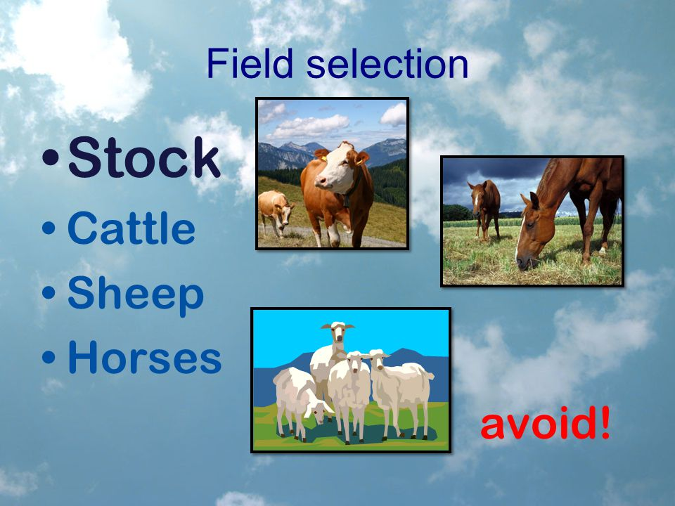 Field selection Stock Cattle Sheep Horses avoid!