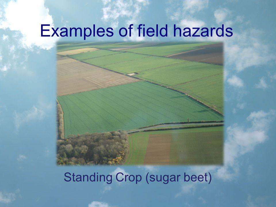 Examples of field hazards Standing Crop (sugar beet)