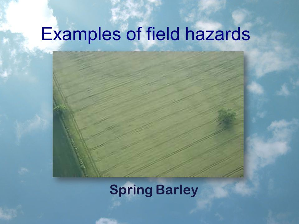 Examples of field hazards Spring Barley
