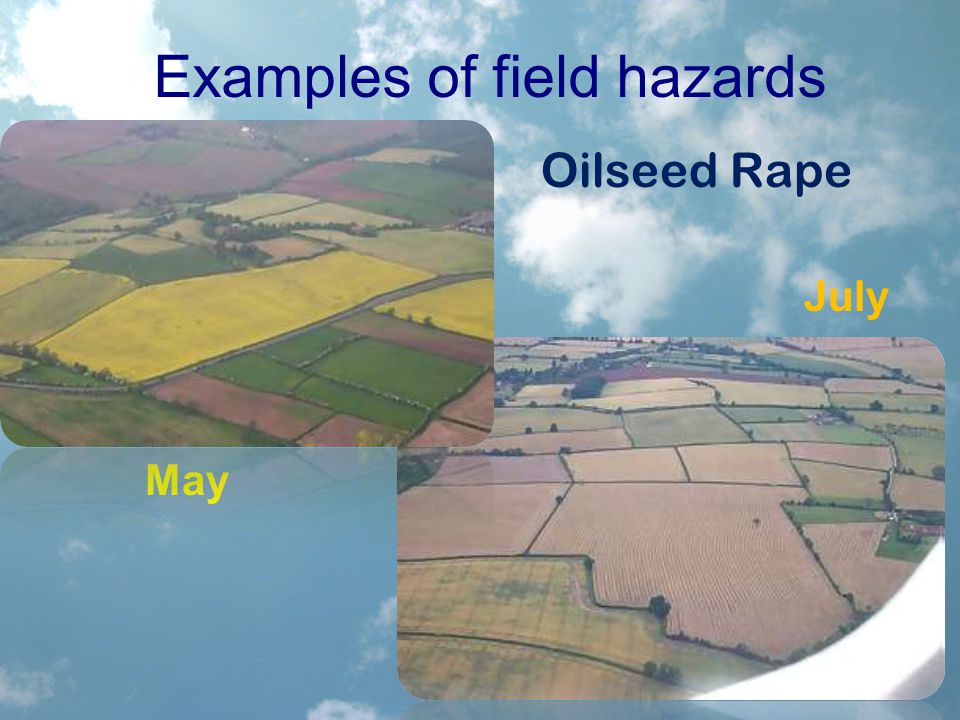 Examples of field hazards Oilseed Rape July May