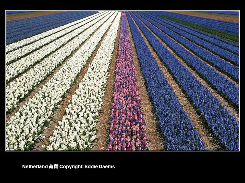 Copyright: Piotr Cichosz Poland 波蘭 Spring field