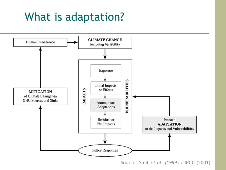 What is adaptation Source: Smit et al. (1999) / IPCC (2001)