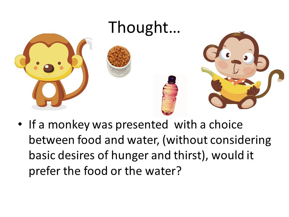 Thought… If a monkey was presented with a choice between food and water, (without considering basic desires of hunger and thirst), would it prefer the