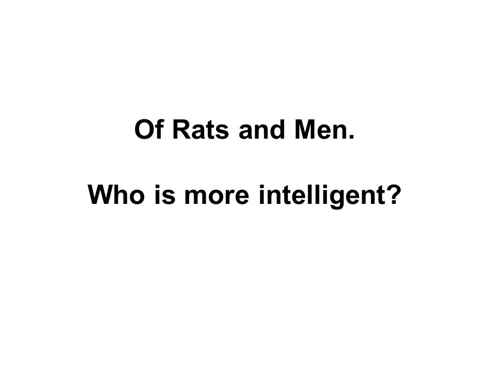 Of Rats and Men. Who is more intelligent