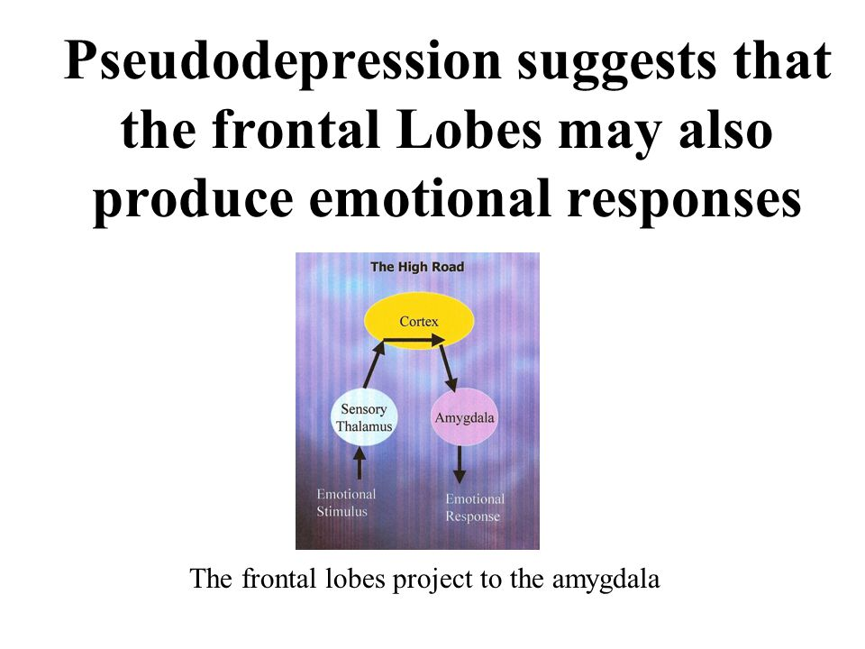 Pseudodepression suggests that the frontal Lobes may also produce emotional responses The frontal lobes project to the amygdala