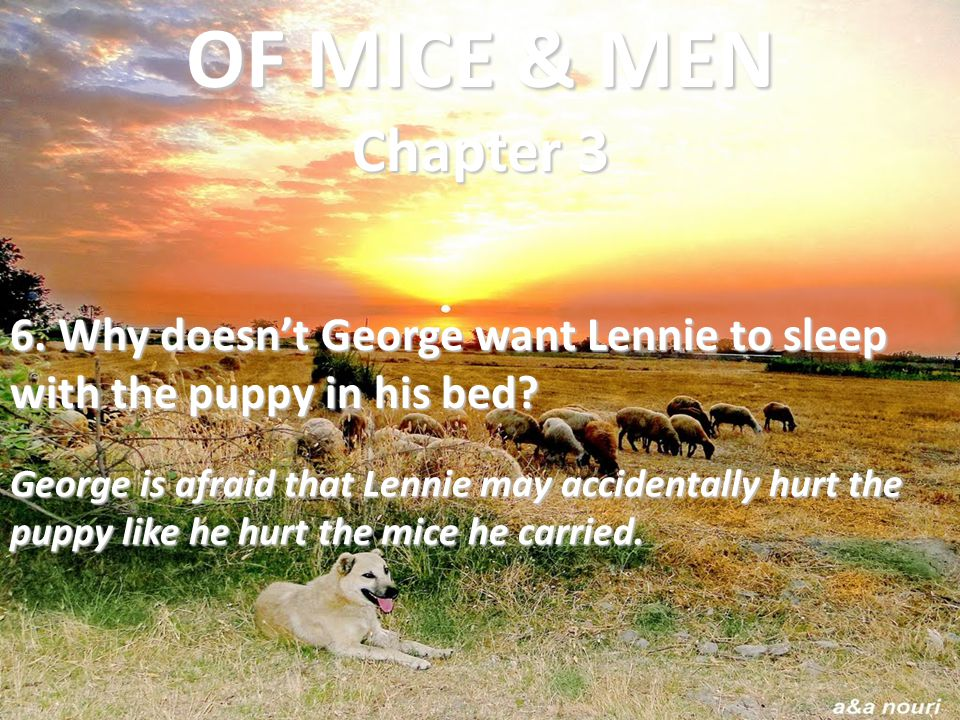 6. Why doesn't George want Lennie to sleep with the puppy in his bed? George is afraid that Lennie may accidentally hurt the puppy like he hurt the mi