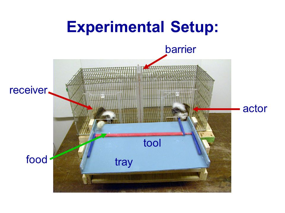 barrier actor receiver tray tool food Experimental Setup:
