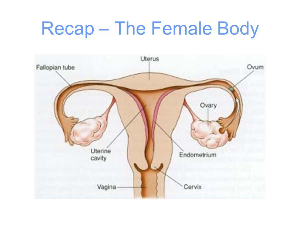 Recap – The Female Body