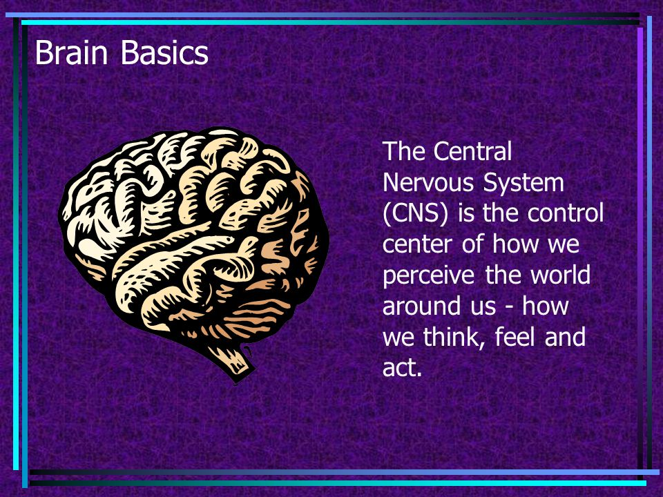 Brain Basics The Central Nervous System (CNS) is the control center of how we perceive the world around us - how we think, feel and act.