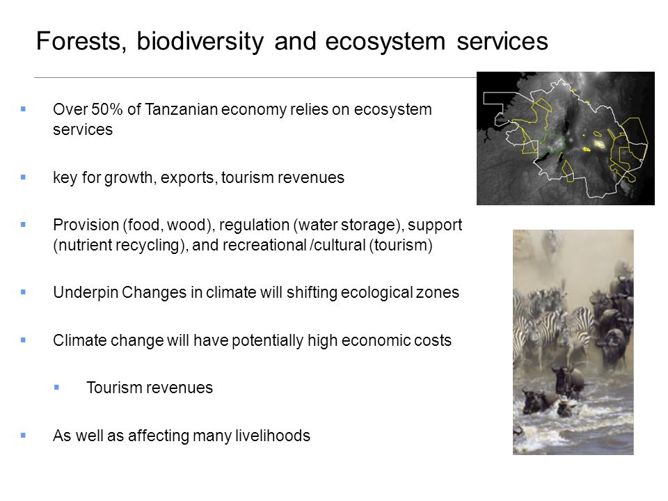 Forests, biodiversity and ecosystem services  Over 50% of Tanzanian economy relies on ecosystem services  key for growth, exports, tourism revenues  Provision (food, wood), regulation (water storage), support (nutrient recycling), and recreational /cultural (tourism)  Underpin Changes in climate will shifting ecological zones  Climate change will have potentially high economic costs  Tourism revenues  As well as affecting many livelihoods