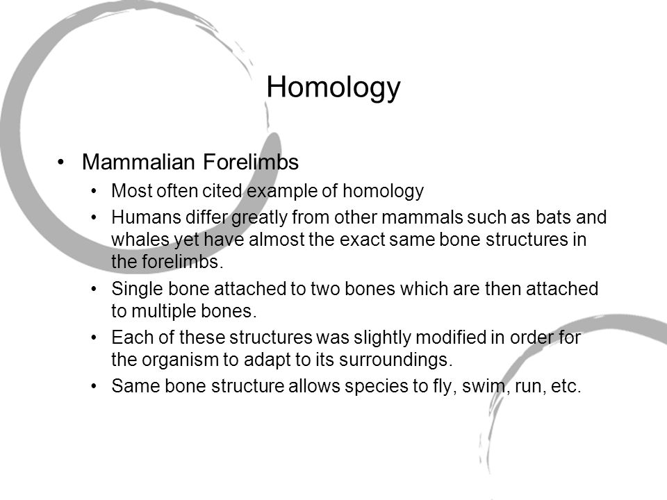 Homology Mammalian Forelimbs Most often cited example of homology Humans differ greatly from other mammals such as bats and whales yet have almost the
