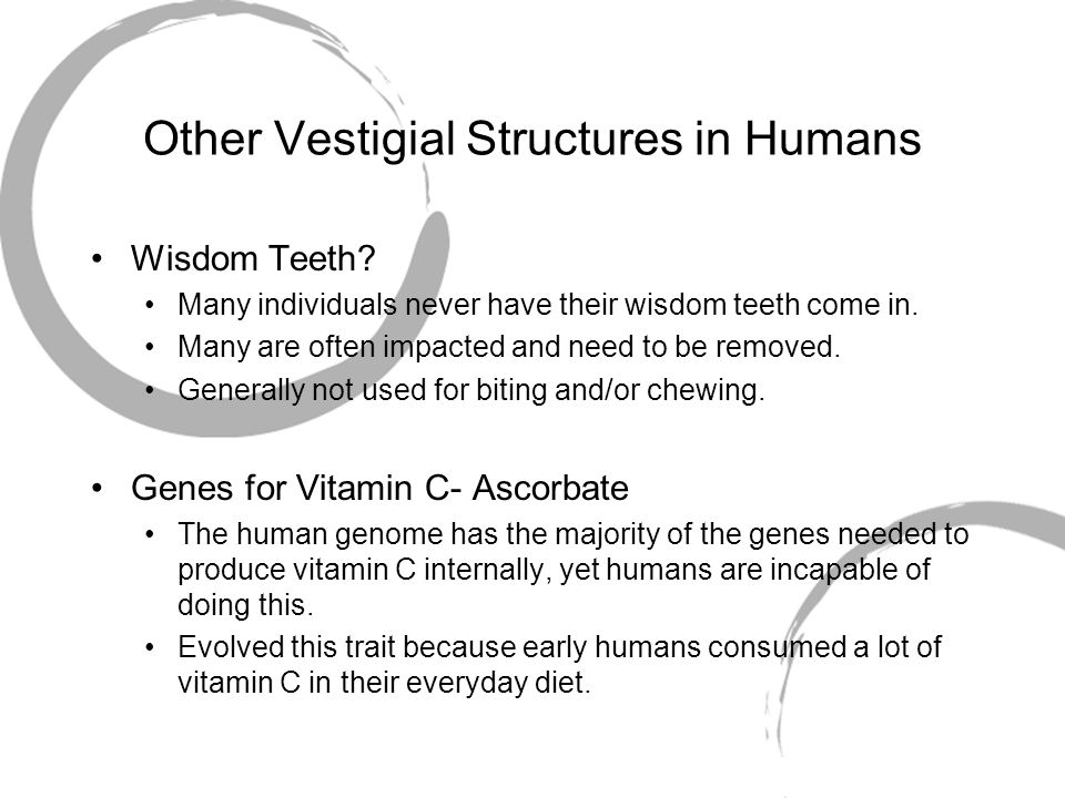 Other Vestigial Structures in Humans Wisdom Teeth? Many individuals never have their wisdom teeth come in. Many are often impacted and need to be remo