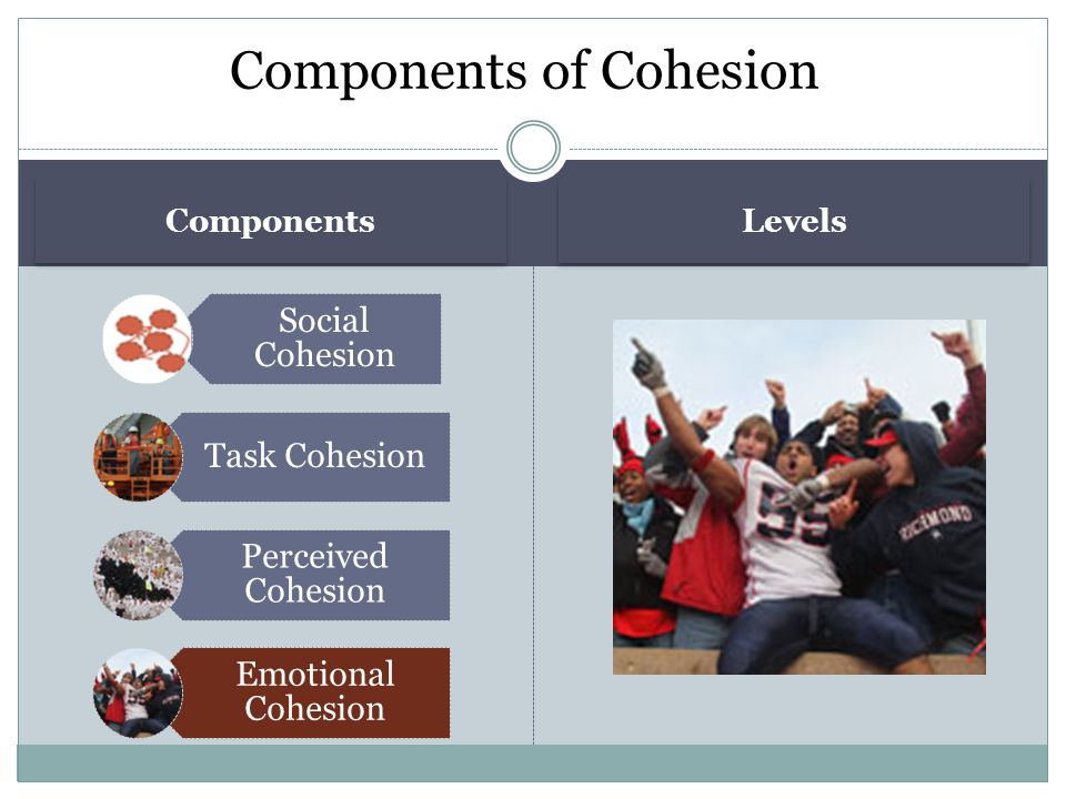 Components Levels Social Cohesion Task Cohesion Perceived Cohesion Emotional Cohesion Components of Cohesion