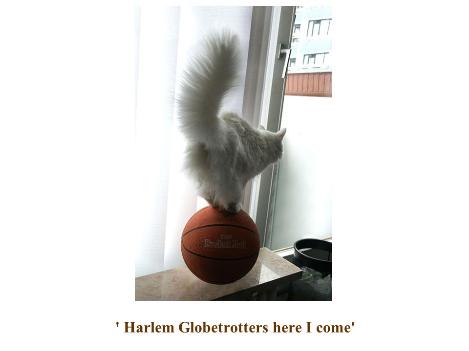Harlem Globetrotters here I come