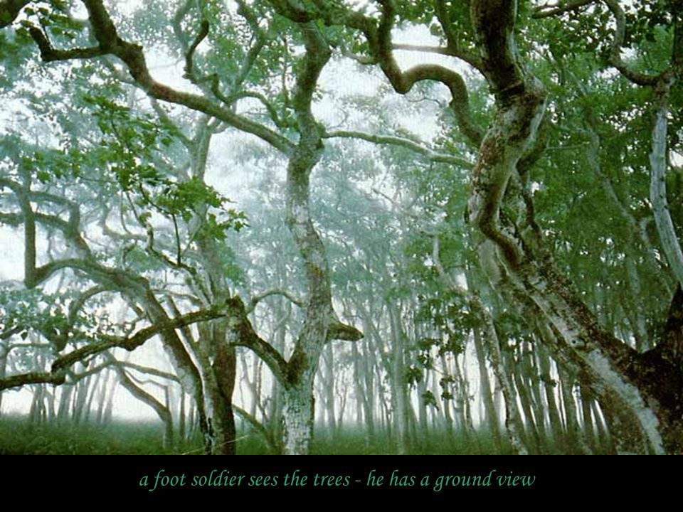 a foot soldier sees the trees - he has a ground view