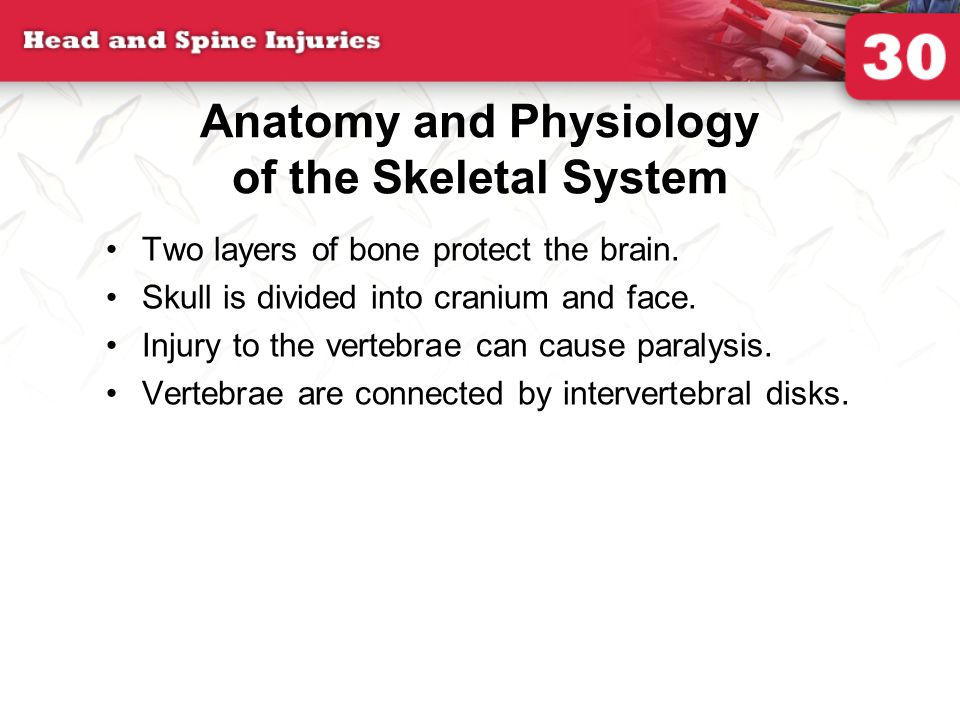 Anatomy and Physiology of the Skeletal System Two layers of bone protect the brain.