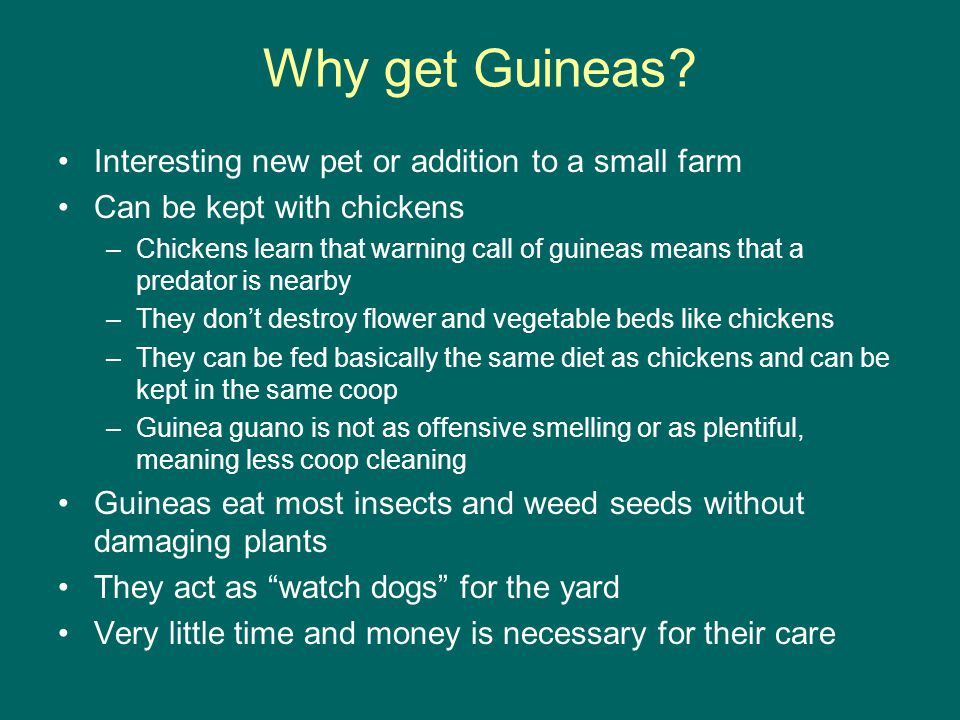 Why get Guineas.