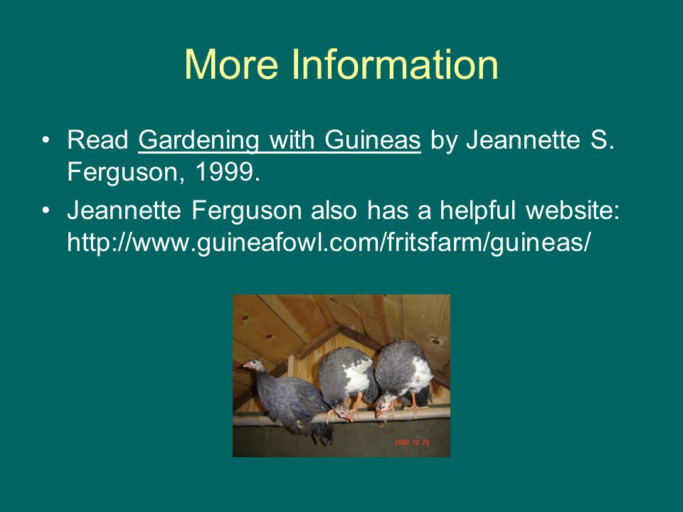 More Information Read Gardening with Guineas by Jeannette S.