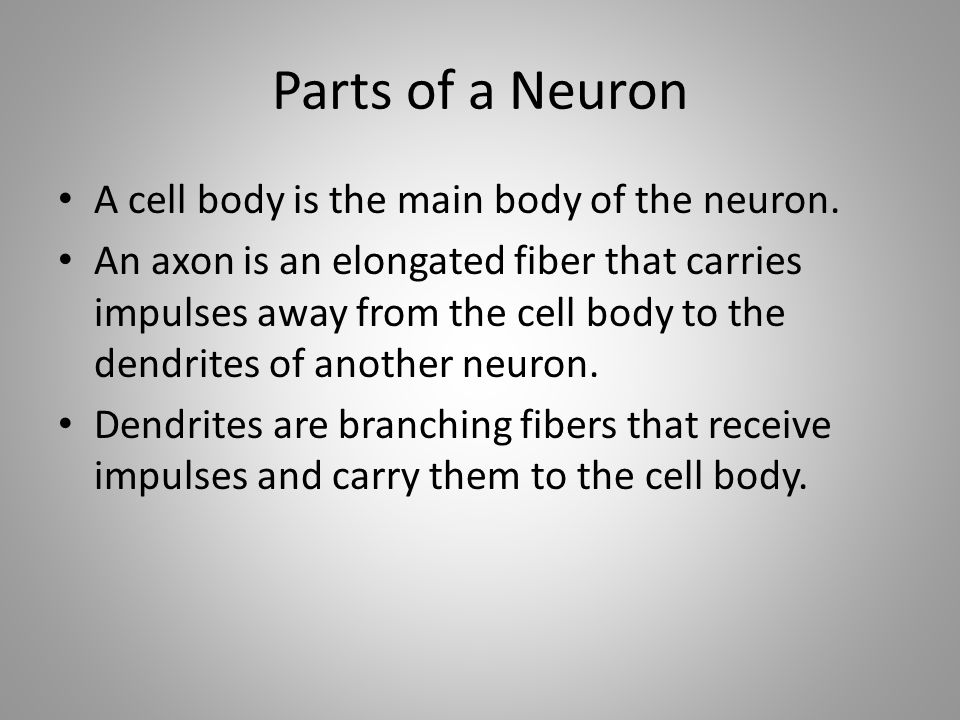 Parts of a Neuron A cell body is the main body of the neuron.