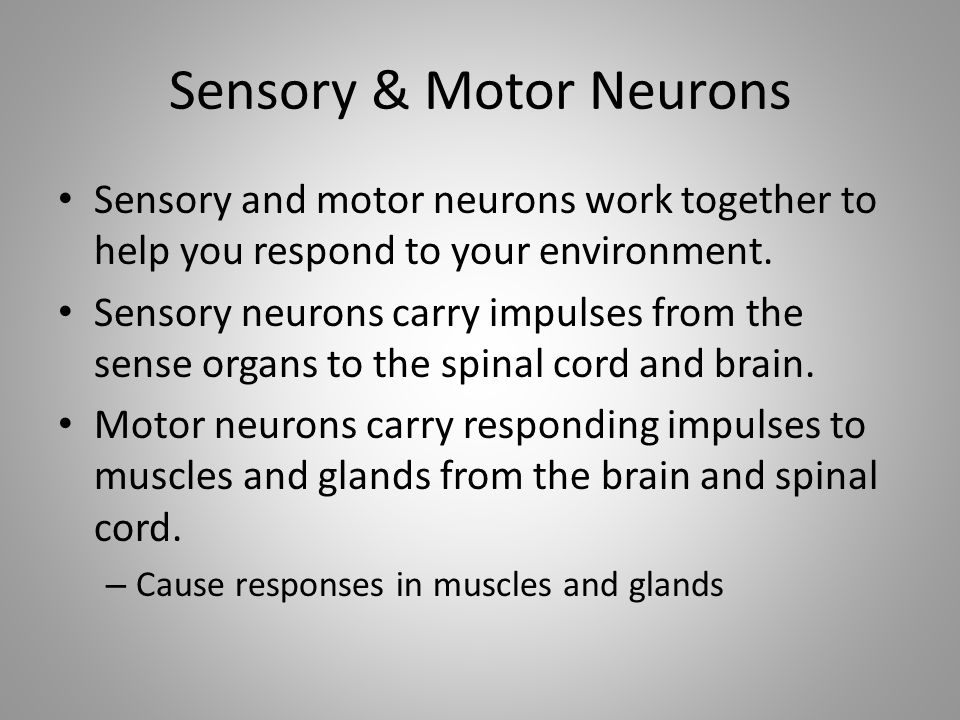 Sensory & Motor Neurons Sensory and motor neurons work together to help you respond to your environment.