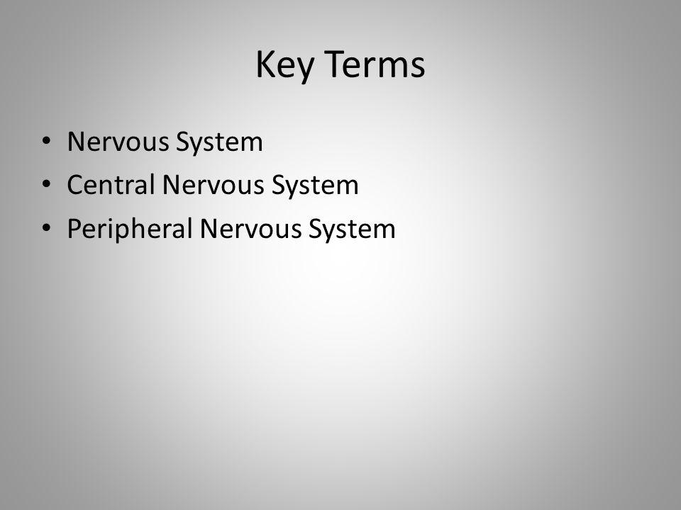 Key Terms Nervous System Central Nervous System Peripheral Nervous System