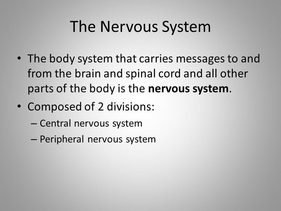 The Nervous System The body system that carries messages to and from the brain and spinal cord and all other parts of the body is the nervous system.