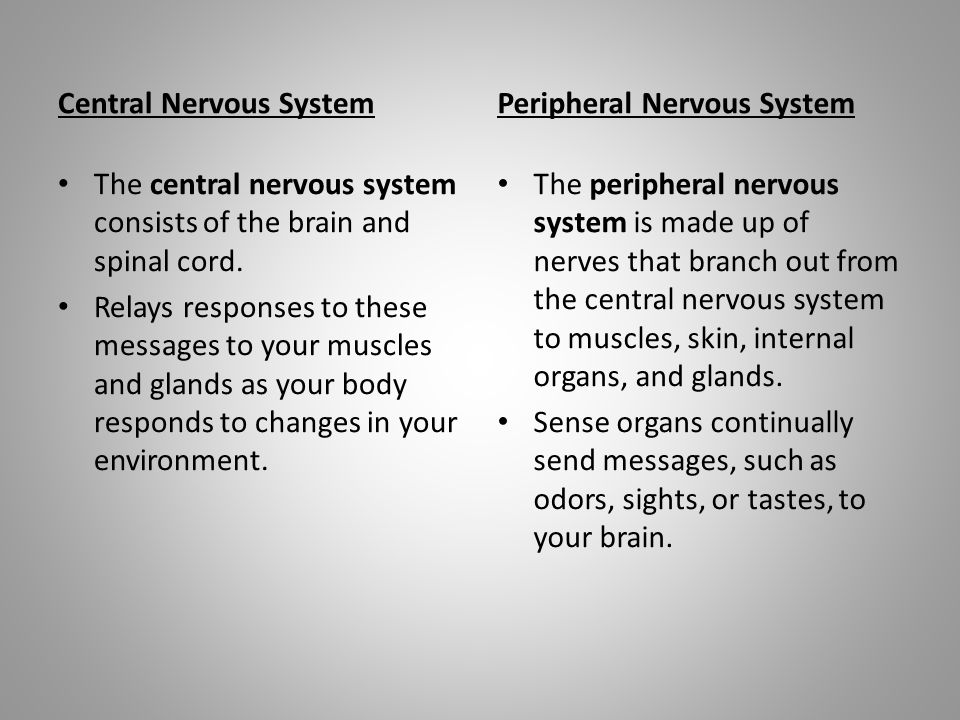 Central Nervous System The central nervous system consists of the brain and spinal cord.