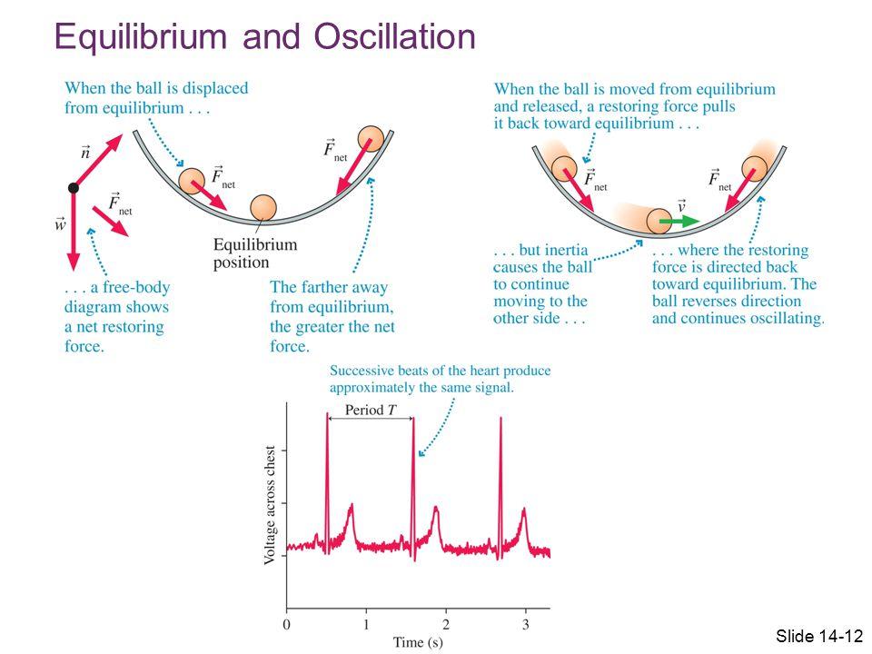 Equilibrium and Oscillation Slide 14-12