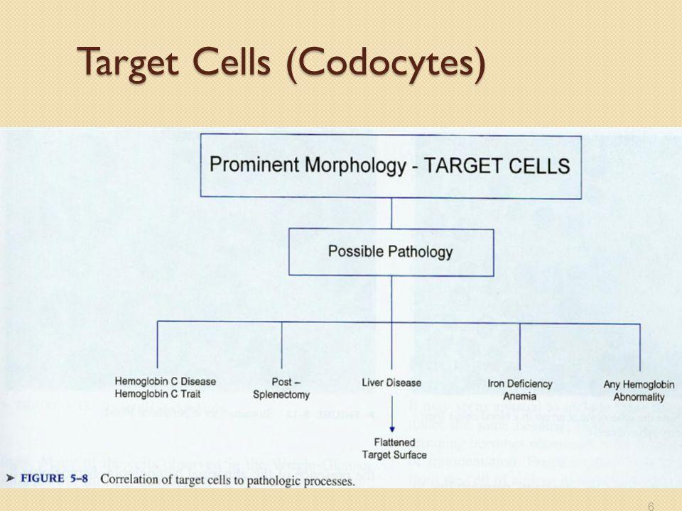 Target Cells (Codocytes) 6